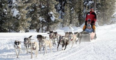 dog sledBend Oregonding at Mt Bachelor, mushing, dog sled, sled, mush, family and friends
